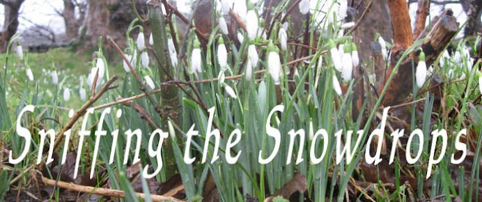Sniffing the snowdrops