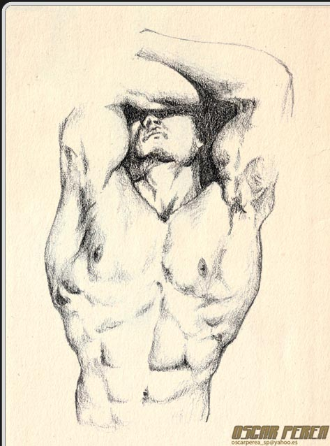 Dibujo: TorsoMusculoso