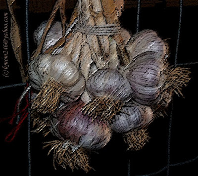 Summer 2008 garlic by kmom246@yahoo.com