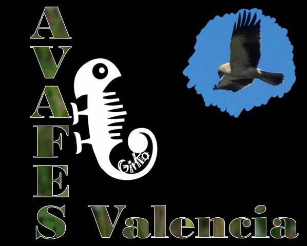 AVAFES Valencia