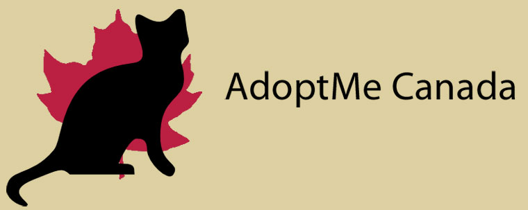 AdoptMe Canada's Cat & Kitten Blog! Cat/Kitten Adoption, Toronto, GTA, ON