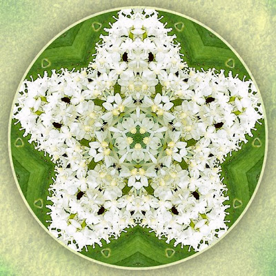 fairyland pentagram mandala