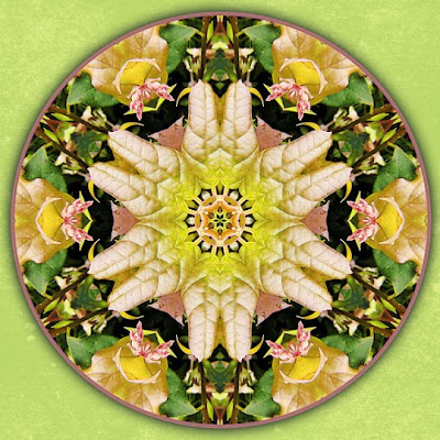 revitalizing mandala