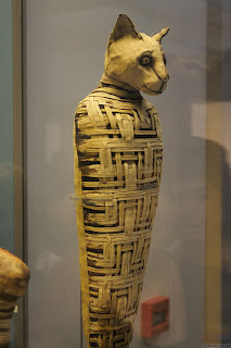 A mummified cat, believed to be guardians of the after world to the Egyptians