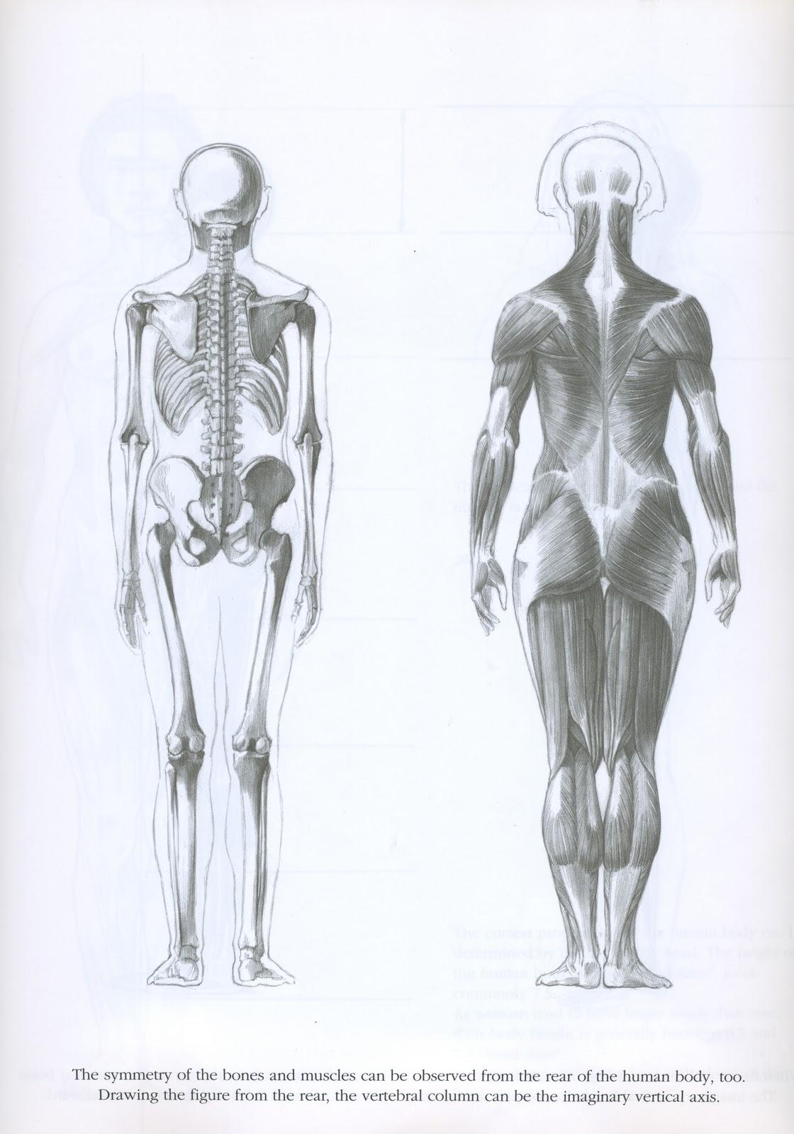 http://1.bp.blogspot.com/_ekfkiJWxZxE/TKfOFcbexgI/AAAAAAAAAYI/4izvLD1Omuo/s1600/anatomy%2Bscan%2B25.jpg