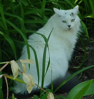 Kumpulan gambar Kucing yang lucu dan menggemaskan