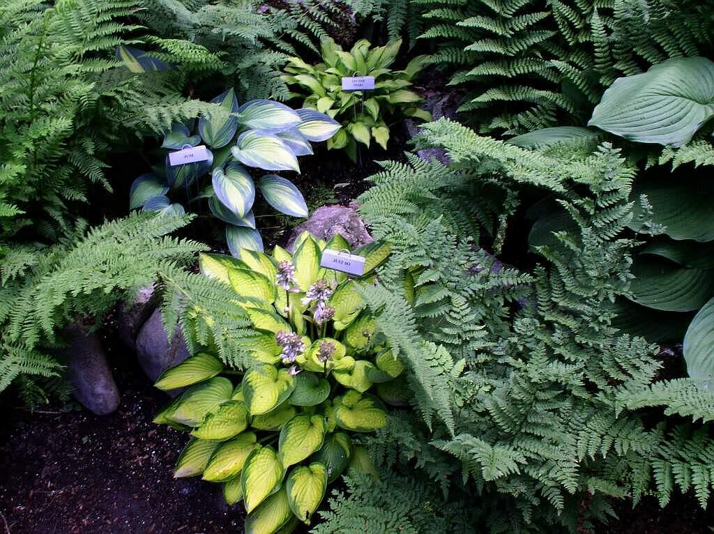 a shade garden off Peacham