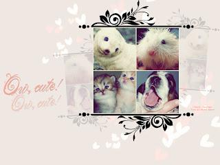 ow cute photofiltre studio wallpaper filhotes gatinhos cachorrinhos