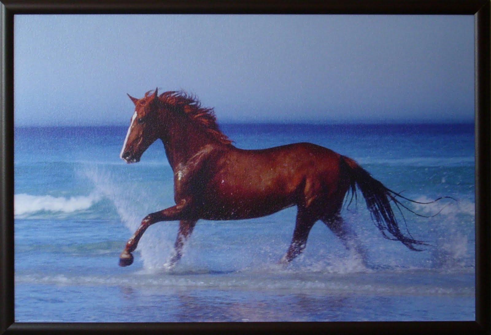 Bilderfabrik1 Pferd Am Strand