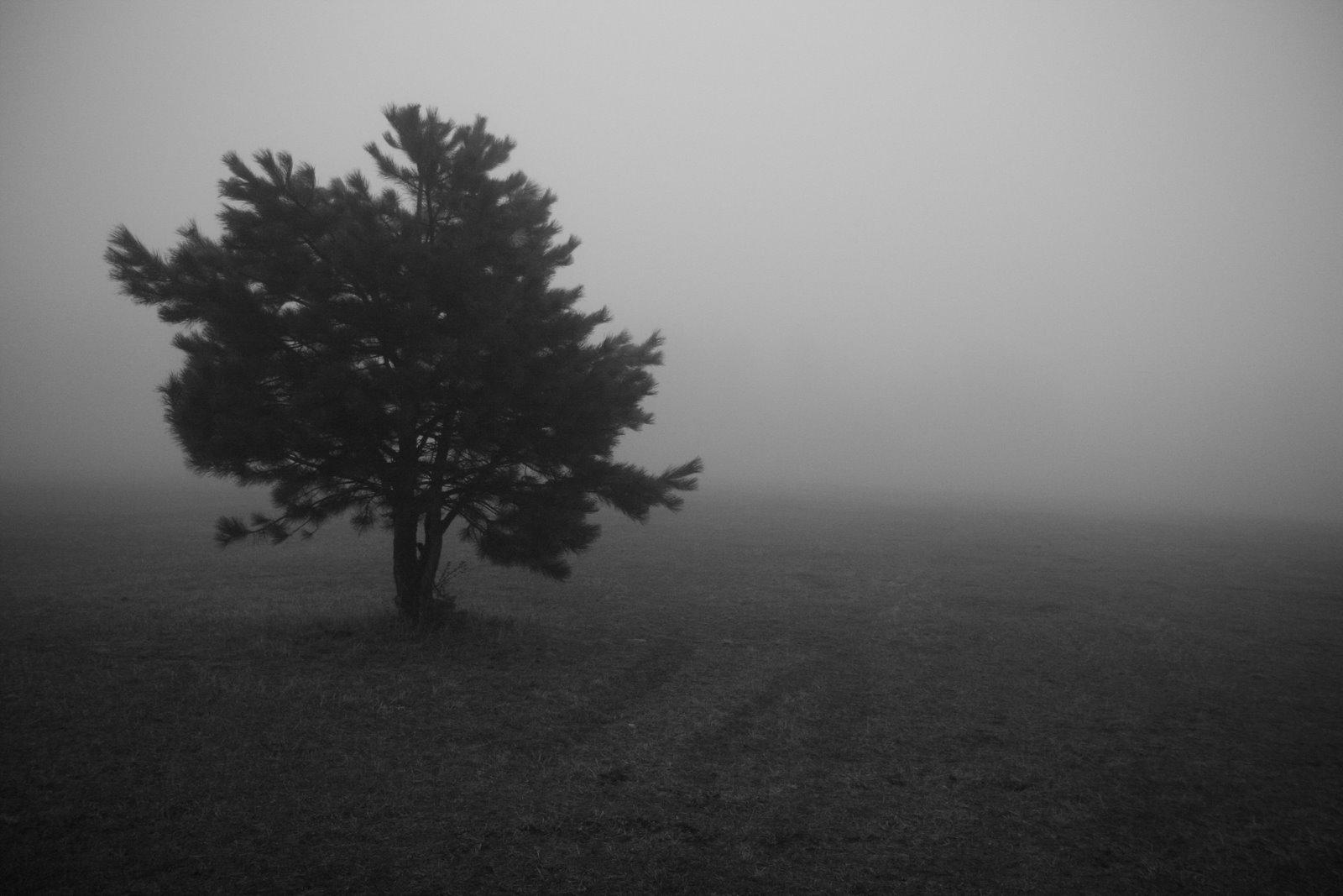 [fog_in_evergreen.jpg]