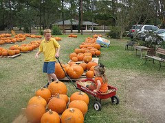 Denham Springs Pumpkin Patch