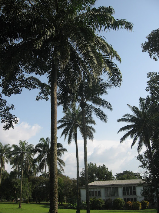 Palm Trees in Africa