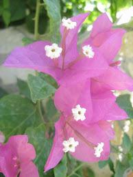 çiçekler çeşit çeşit..)