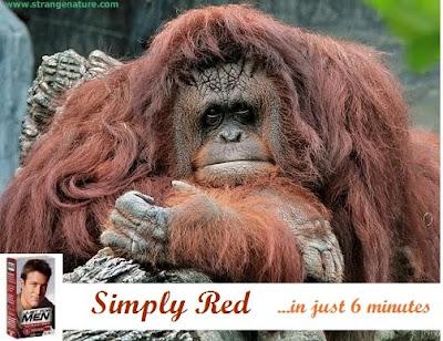 funny monkey | Andrew Garfield