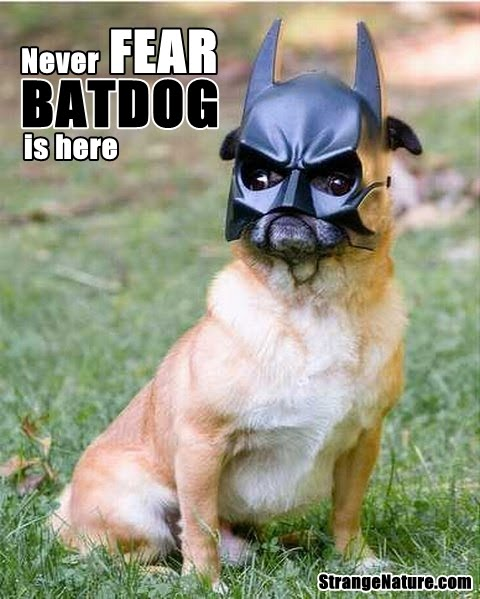 Funny superhero animals funny animal pictures strangenature com