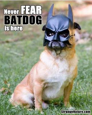 http://1.bp.blogspot.com/_en3tE7aKwk8/TEfJFMt7F6I/AAAAAAAACJ4/T6JNkacuCY4/s1600/bat+dog+superhero+animals.jpg