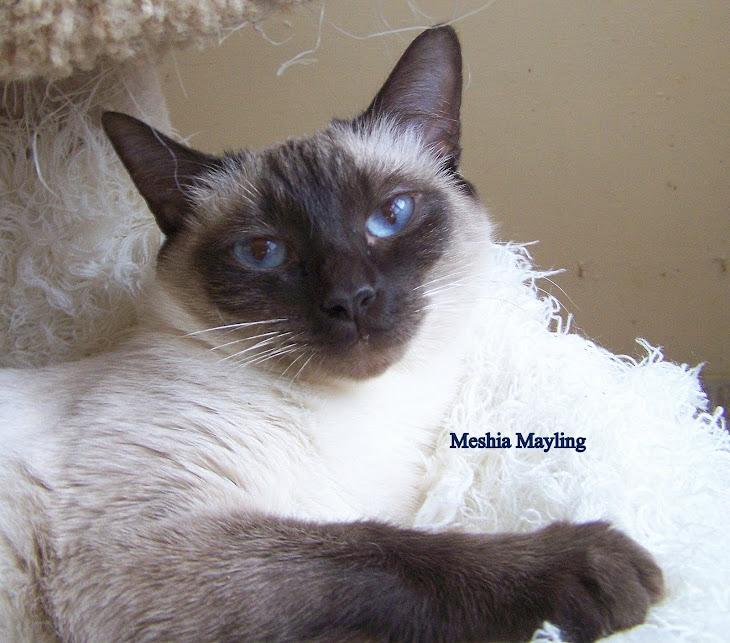 Meshia , needs a home. she is 6  soon.