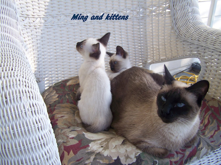 Ming and her kittens  2009