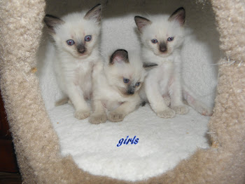 Bella has three girls availble for March.