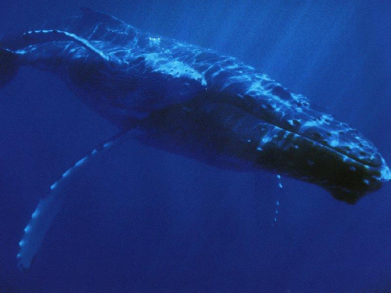 [Blue+Whale+xx]