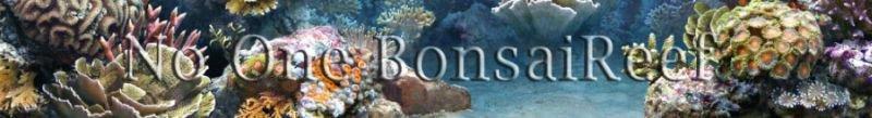 BonsaiReef
