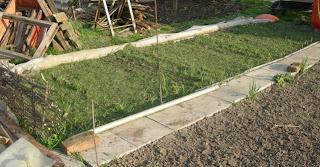 Vékony fűnyesedékkel takart répa és zöldségvetés