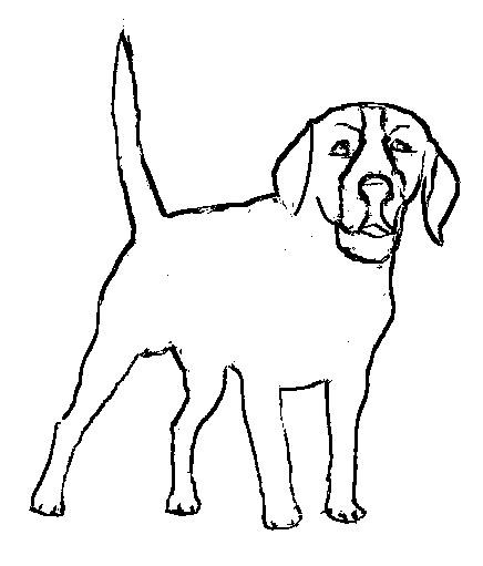 Dibujos e Imagenes - Easy coloring pages: Dibujos de animales para ...