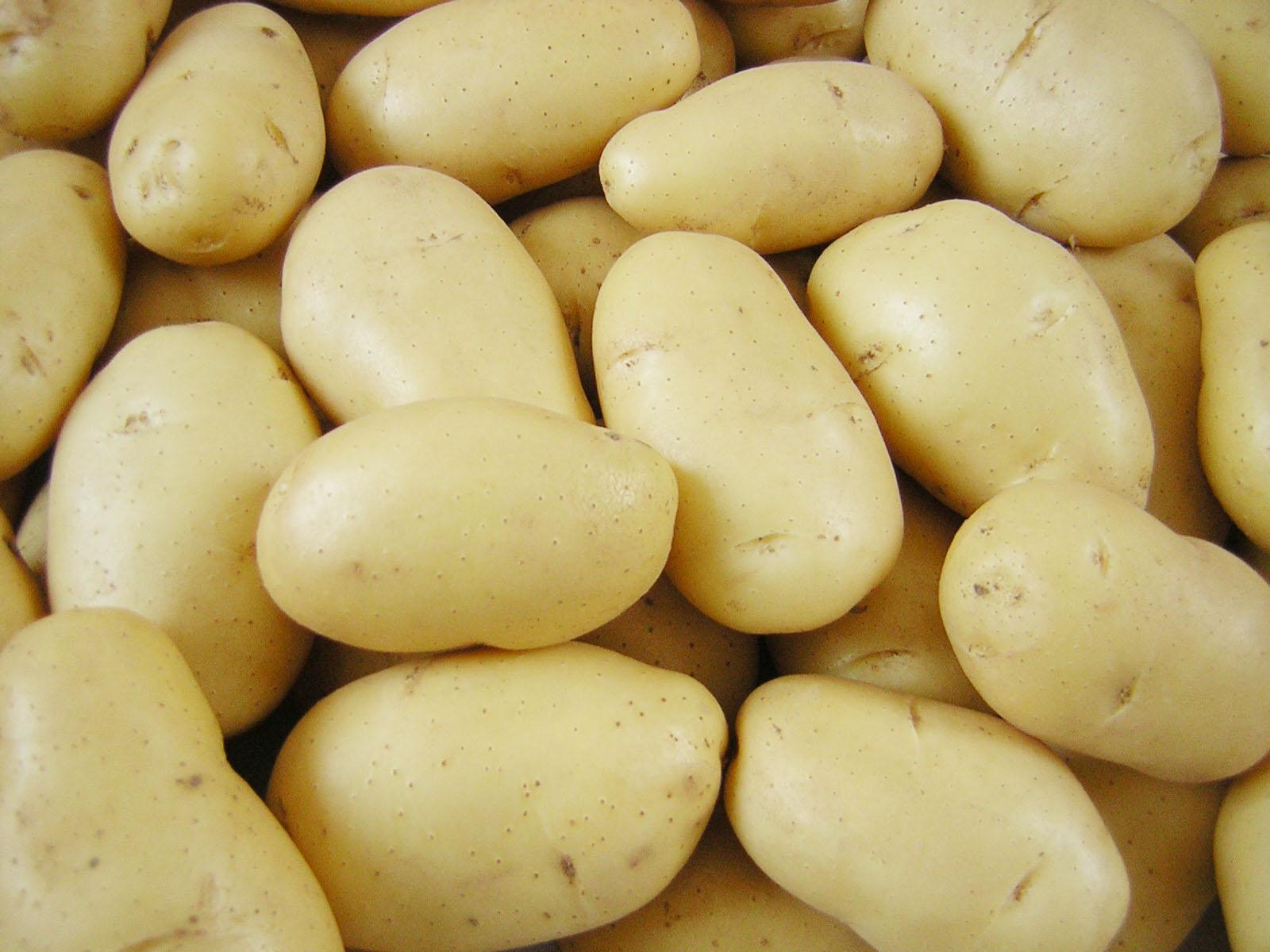http://1.bp.blogspot.com/_eq9Ae3PzIVE/TMcbNIyrC2I/AAAAAAAAMnc/Qac2tpDyTds/s1600/batatas.jpg