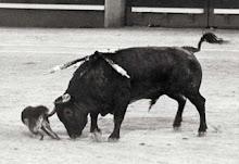 el único toro indultado en las ventas
