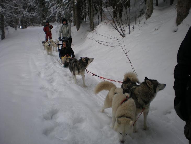 ...se balader en chiens de Traineaux avec Jacky!!