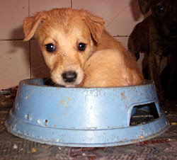 Puppy in food bowl