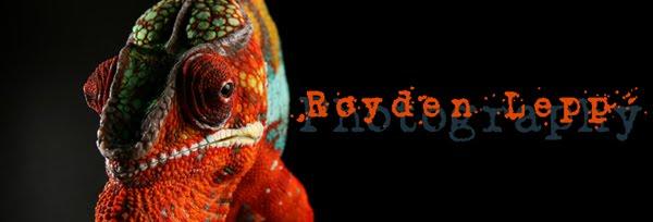 Royden Lepp Reptile Photography