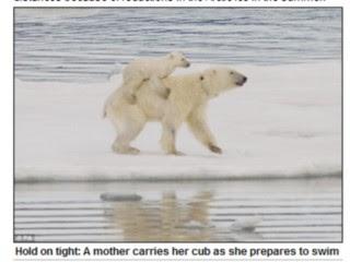 母北極熊背小熊