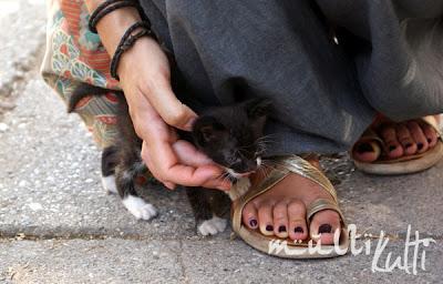 Fethye Turcja, kociak