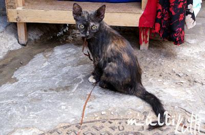 Fez Maroko, kociak