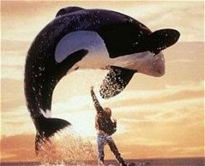 Picture of Free willy - #2