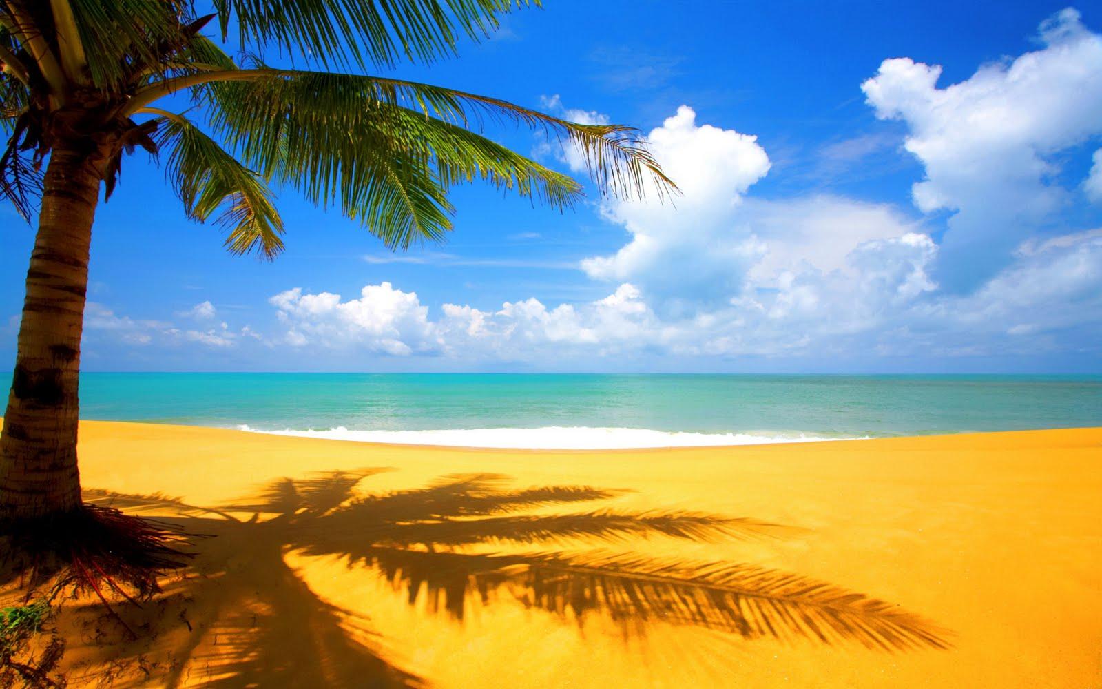 http://1.bp.blogspot.com/_euRtaEmNtFo/TFaqWhdSuUI/AAAAAAAAA78/uXoDXbj_G90/s1600/at-the-beach-hd-wallpaper.jpeg