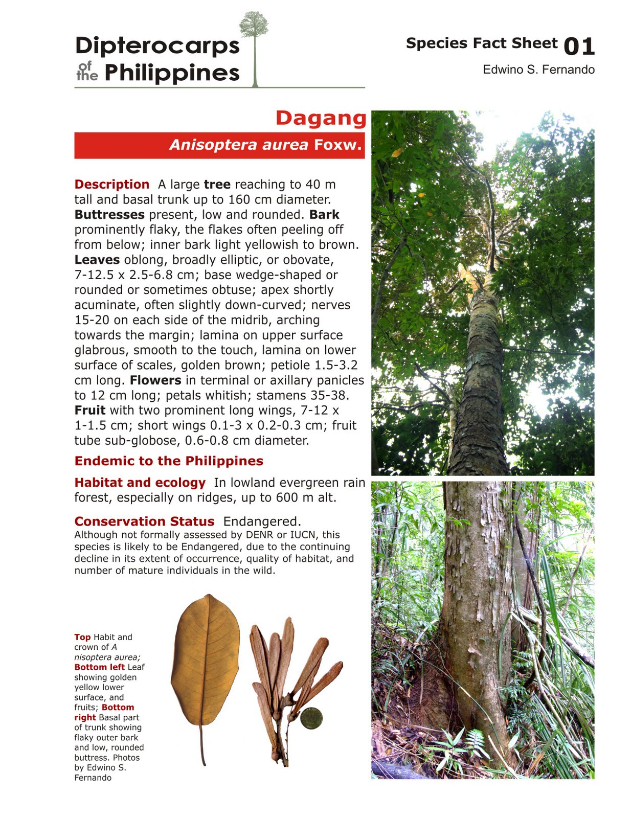 Dipterocarps Philippine Hardwood Species Soil And Water