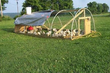 Talkin' About My Chicken Tractor