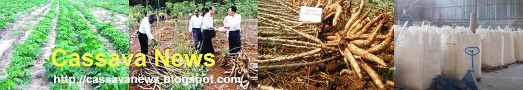 Cassava News