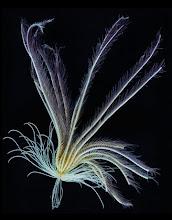 Feather Star sea creature