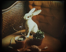 Rabbit Still Life