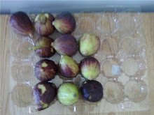 Figs at work
