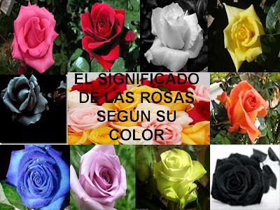 Una ventana para todos el significado de las rosas segun - Significado de los colores de las rosas ...