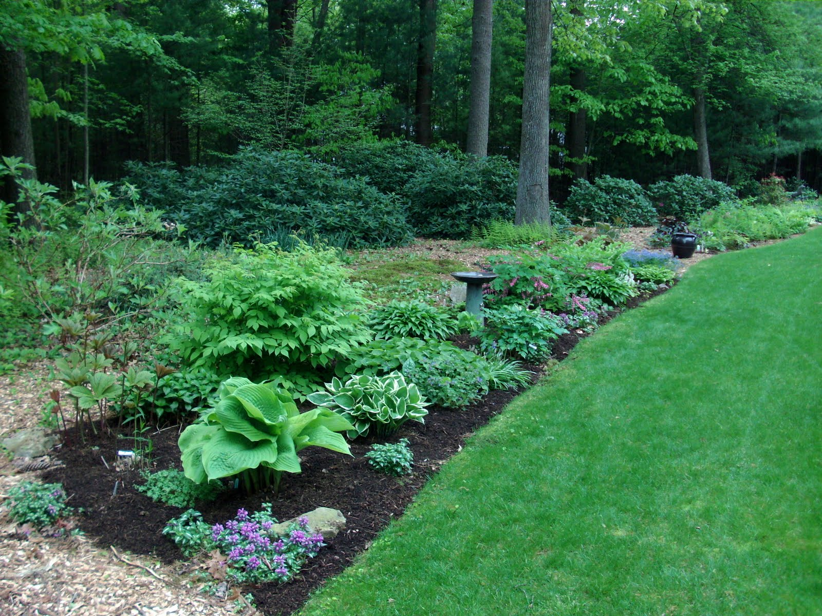 Shade Garden Ideas Zone 5 modren shade garden ideas zone 5 blooming perennial for the 9