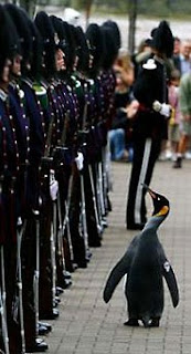 King Penguin Sir Nils Olav inspects Royal Norwegian Guard in Edinburgh, Scotland