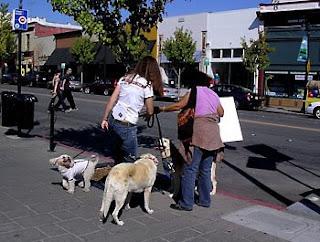 Friends on Petaluma Blvd. at PET Out the Vote