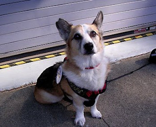 Tilin Corgi sez pawleeze don't block humane change!