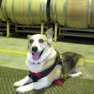 winecountrydog in C. Donatiello barrel room
