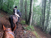 Trail Riding in Tuscan Woods